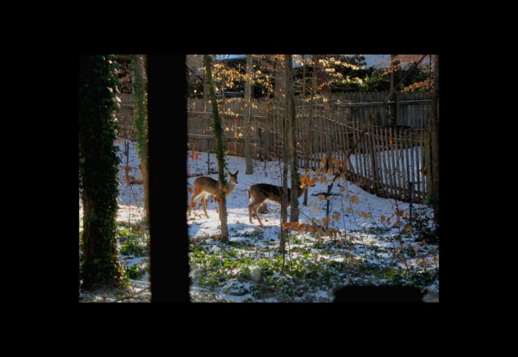 deer-smaller2